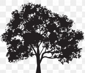 Tree Silhouette Clip Art Image - Silhouette Tree Clip Art PNG