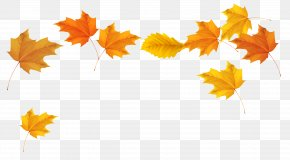 Fall Leaves Picture - Autumn Leaf Color Clip Art PNG