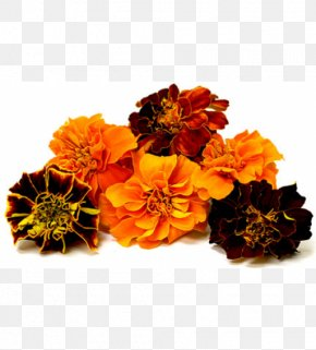 Flower - Flower Mexican Marigold Puja Lutein Seed PNG