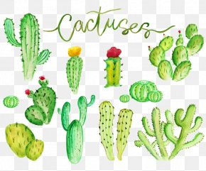 Cactus - Cactaceae Watercolor Painting Stock Illustration Illustration PNG