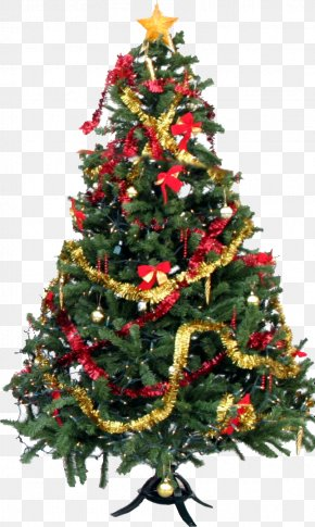 Christmas Tree Picture - Christmas Tree PNG