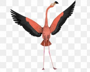Flamingo - Bird Flamingo Flight Wing Clip Art PNG