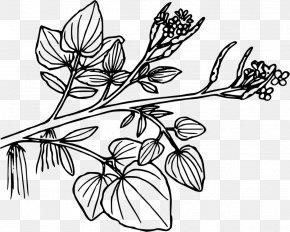 Salad Drawing Plant Flower - Clip Art Aquatic Plants Openclipart PNG