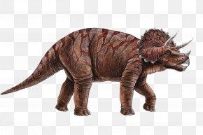 Dinosaur - Dinosaur Museum Triceratops Tyrannosaurus Pachycephalosaurus Ceratopsia PNG