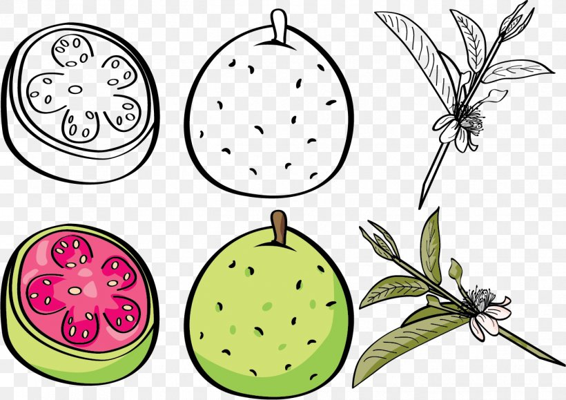 Guava Euclidean Vector Fruit Clip Art, PNG, 1342x949px, Cartoon, Clip Art, Flora, Flower, Flowering Plant Download Free