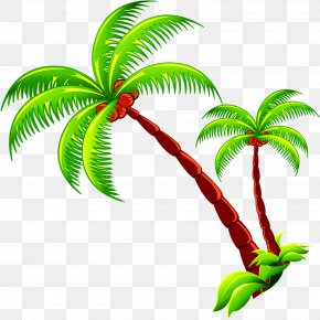 Coconut Tree - Coconut Tree Branch PNG