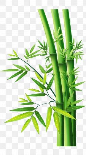 Bamboo Bamboo - Bamboo PNG