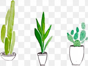 Cactus - Watercolor Painting Drawing Plant PNG