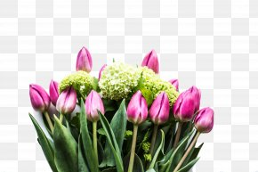 Pink Tulips - Happy Birthday To You Wish Greeting Card PNG