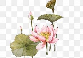 Watercolor Lotus Lotus - Nelumbo Nucifera 2012 Lotus Evora Illustration PNG