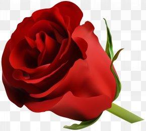 Red Rose Clip Art Image - Blue Rose Flower Clip Art PNG