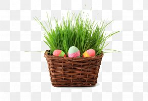 Grass Basket And Eggs - Easter Bunny Easter Egg Wish Egg Hunt PNG
