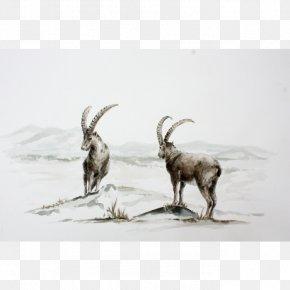 Goat - Goat Cattle Horn Wildlife Mammal PNG