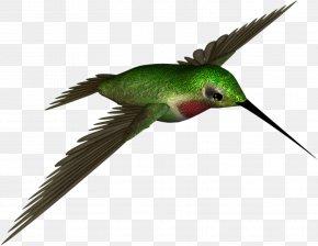 High Resolution Clipart - Hummingbird Clip Art PNG