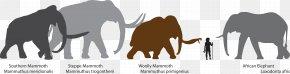 Elephants - Mammuthus Meridionalis Woolly Mammoth African Bush Elephant Steppe Mammoth Columbian Mammoth PNG