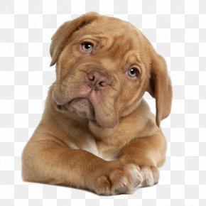 Dogs - Dogue De Bordeaux English Mastiff Perro De Presa Canario Tibetan Mastiff Puppy PNG