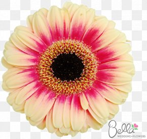 Daisy Wedding - Transvaal Daisy Flower Bouquet Cut Flowers Common Daisy PNG