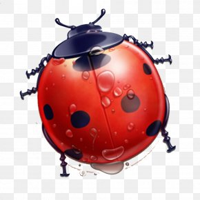 Ladybug Theme Elements With Water Droplets - User Interface Icon Design Icon PNG