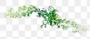 Leaf Plant Stem Line Font Flowering Plant PNG