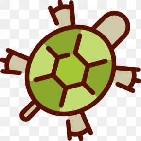Little Green Turtle - Turtle Euclidean Vector Download Icon PNG
