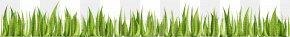 Green Grass - Adobe Illustrator Adobe Systems Wheatgrass U0633u0628u0632u0647 PNG