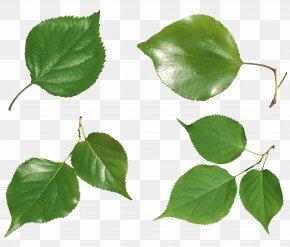 Green Leaf - Leaf Icon PNG