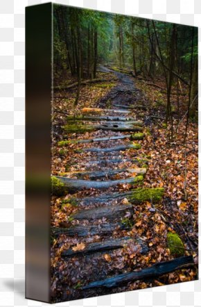 Forest Path - Gallery Wrap Canvas Forest Tree Art PNG