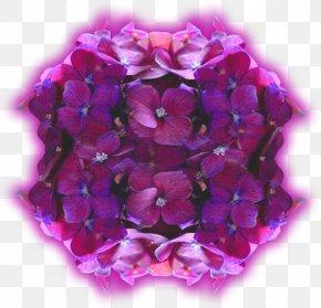 билкова аптекаViolet - Hydrangea Violet Cut Flowers Petal Вербена М PNG