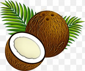Arecales Plant - Palm Tree PNG