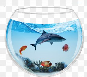 Aquarium Containing Sharks - Dolphin Shark Aquarium Fish PNG