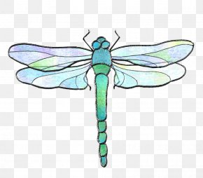 Dragonfly - Insect Dragonfly Invertebrate Pollinator PNG