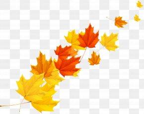 Autumn Maple Leaf Vector - Maple Leaf Autumn PNG