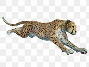 Free To Pull The Running Cheetah Material - Cheetah African Leopard Remote Camera PNG