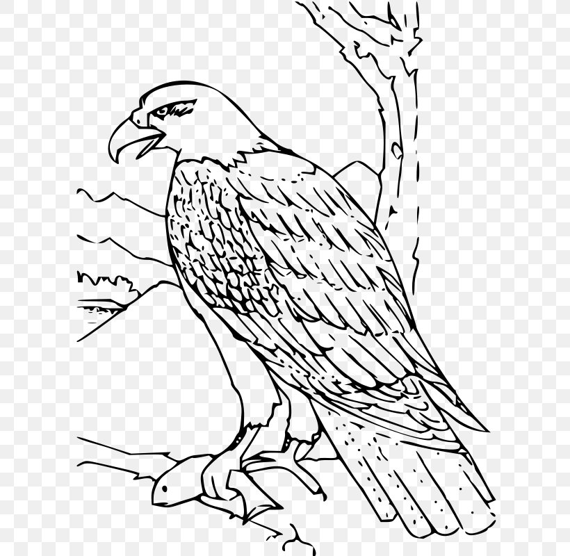 Bald Eagle White-tailed Eagle Coloring Book, PNG, 615x800px, Bald Eagle, Adult, Animal, Area, Art Download Free