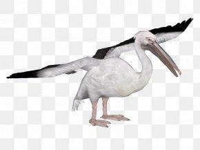 Bird - Heron Water Bird Spoonbills Great White Pelican PNG