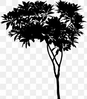 Asian Palmyra Palm Palm Trees Leaf Plant Stem Twig PNG