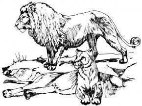 Lioness Cliparts - Lion Tiger Big Cat Clip Art PNG