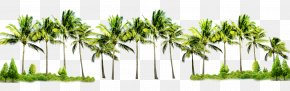 Coconut Tree - Poster Flyer Graphic Design PNG