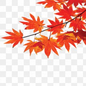 Red Leaf - Autumn Poster Maple Leaf PNG