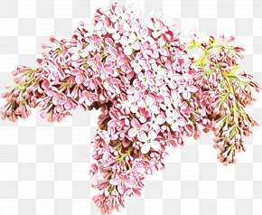 Blossom Cut Flowers - Pink Flower Plant Cut Flowers Blossom PNG