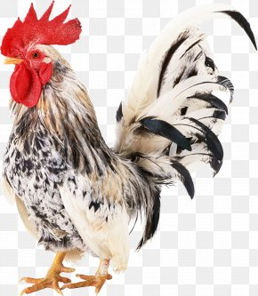 Cock - Chicken Rooster PNG