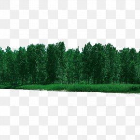 Forest Forested - Tree Forest PNG