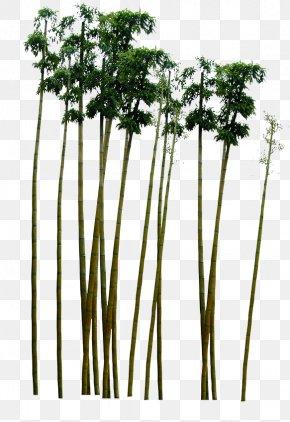 Green Bamboo - Paper Green Bamboo PNG