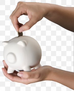 Save Piggy Bank - Domestic Pig Piggy Bank Coin PNG