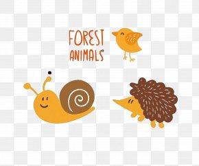 Animal Bird Hedgehog Snail - Hedgehog Bird Duck Snail Orthogastropoda PNG