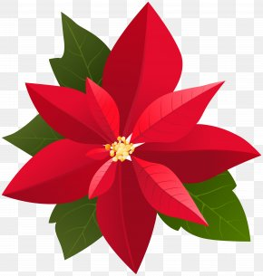 Christmas Poinsettia Clip Art - 2018 Chrysler Pacifica Hybrid Christmas Befana Clip Art PNG