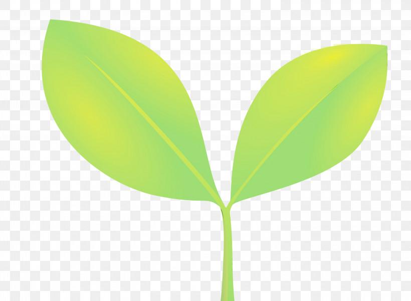 Leaf Green Plant Flower Plant Stem, PNG, 3000x2198px, Sprout, Bud, Eucalyptus, Flower, Flush Download Free