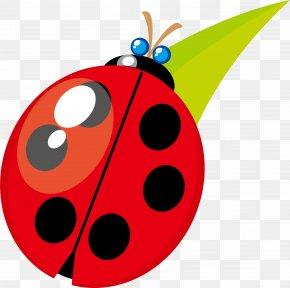 Ladybug Vector Material - Beetle Ladybird Clip Art PNG