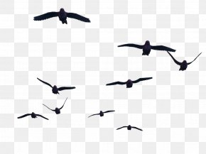Bird - Bird Flight Bird Flight Clip Art PNG