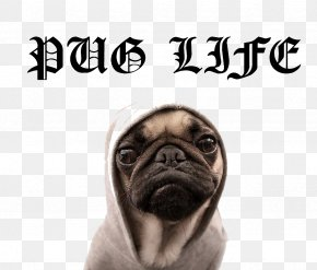 Pug Life File - Puggle T-shirt Puppy Dog Breed PNG